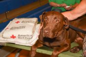 Pet Shelter Story - Dog with RC Blanket